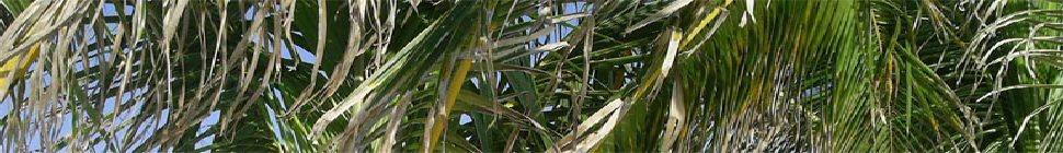 Diakonia UCA header image 3